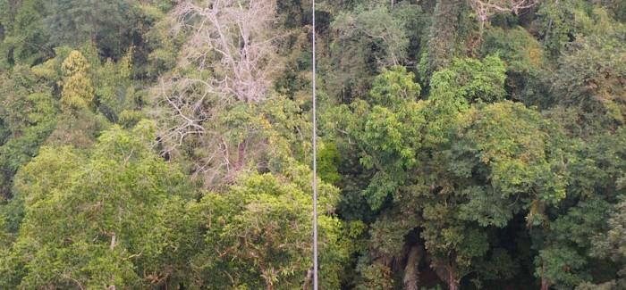 Niczym gibon w laotańskiej dżungli