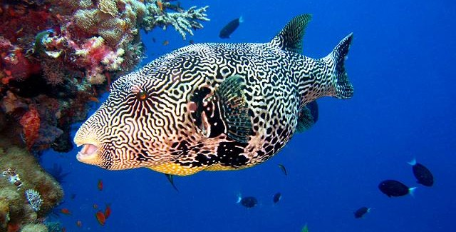 Snorkeling czy nurkowanie?
