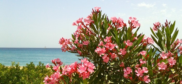 PERFECT DAY IN KEFALONIA – GREEK HOLIDAYS