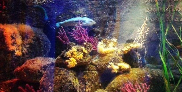 AquaDom & SEA LIFE Berlin – odkrywanie podwodnego świata