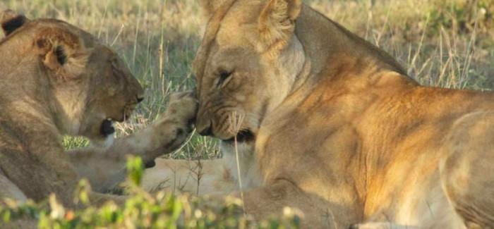 KENIA PHOTO STORY part2