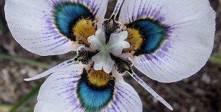 kwiaty tlo2