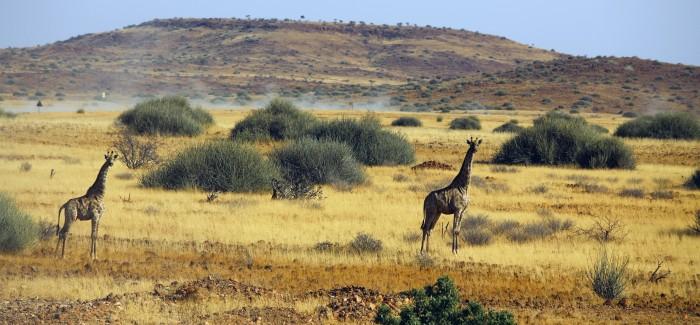 NAMIBIA 4×4