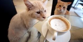zdjecie kota przy kawie