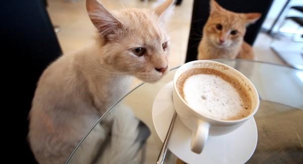 Kociarnia, czyli krakowski raj dla wielbicieli kotów