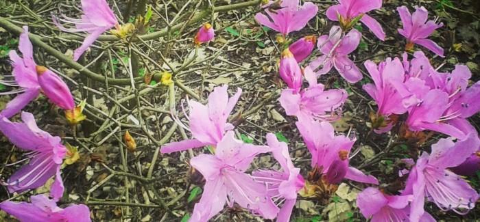 Bajkowy świat kwiatów w Powsinie