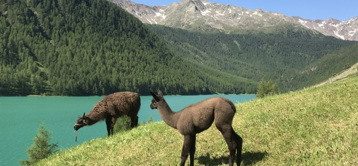 Marząc o idealnych wakacjach: 11 powodów, by wybrać się do Maso Corto
